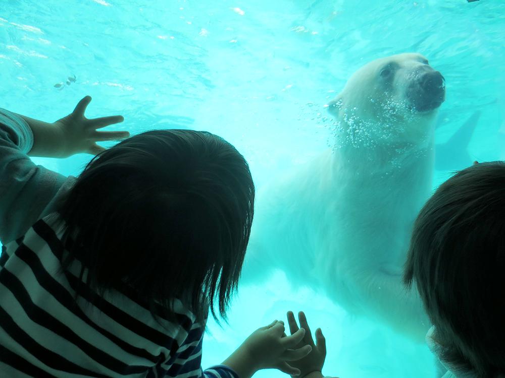 上野動物園20161022_3